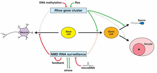 institute for genomic medicine uc san diego health sciences